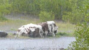 Raining again!!